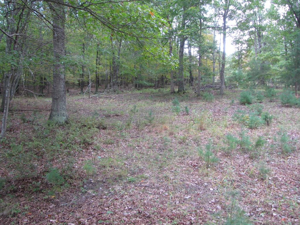 If you are looking for a great building lot with several building sites just 10 minutes to town.. There is septic already in place that is for a 2 bedroom. There use to be a mobile home on this lot.  Lot is wooded and lays well! There is no well as tax records indicate. . Buyer and buyer agent to verify mineral rights. The land is restricted to Double or Single wide homes  However off-frame modular are permitted.with a minimum of 1,500 sq ft of living space.