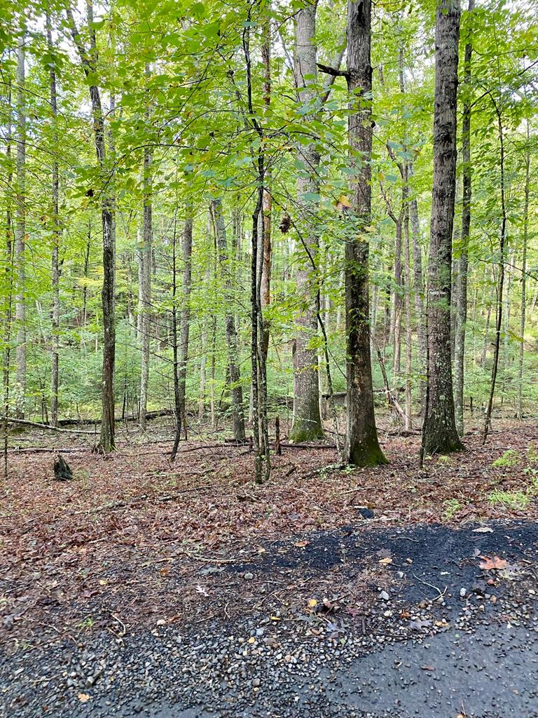 Private, wooded building lot offers a beautiful building site nestled in the trees.  This half acre tract is  in a nice neighborhood just outside the town of Hillsville. Close and convenient to Schools , shopping and recreation facilities.