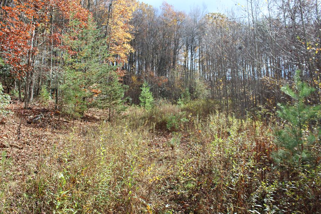 7.14 acres of land for sell in Floyd, Va (5962 Buffalo Mountain Rd, Meadows of Dan, Va 24120). All Wooded. Fronts on State Paved Road. Graveled Driveway from State road into the property. Several Good building sites. Abundant wildlife - hunting. 2 small spring branches crosses the property. Old House on the property needs to be torn down. Road into the property where there is a cleared spot where owner was going to build a home and also road to the old house. Telephone and Electric available. Note: Spring on property supplies water to the adjoining house. 10 minutes to Meadows of Dan, VA and Blue Ridge Parkway. 20 minutes to Floyd, VA. 1 hour to Christiansburg, VA and Blacksburg, VA.