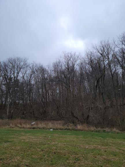 Beautiful, level lot in town limits. Town water and sewer available. Mostly wooded but with cleared area large enough for a beautiful home.