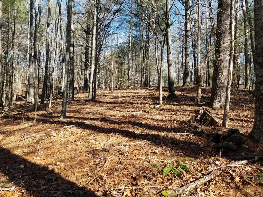 GREAT LOCATION FOR THIS 20.88 ACRE TRACT, JUST 10 MINUTES WEST OF THE TOWN OF INDEPENDENCE. THIS PROPERTY OFFERS LOTS OF POSSIBILITIES, SUCH AS:  UPDATE/REMODEL THE EXISTING DWELLING FOR YOUR FULL OR PART TIME RESIDENCE, HUNTING CABIN OR BUILD A NEW HOME ON ONE OF THE MANY BUILDING SITES.  DRIVEWAY, GRAVITY SPRING FED WATER SYSTEM AND SEPTIC SYSTEM ALREADY IN PLACE (SPRING WATER SYSTEM NEEDS SO WORK).  MOSTLY WOODED TRACT WITH TIMBER VALUE, EXCELLENT HUNTING WITH PLENTIFUL WILDLIFE AND TWO WATER SOURCES TRAVERSING THROUGH THE PROPERTY WITH POTENTIAL POND SITE.