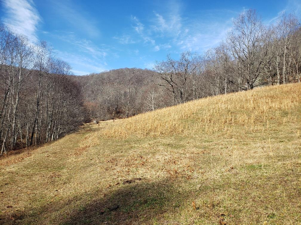 35+/- ACRES IN GRAYSON COUNTY WITH LONG DISTANT VIEWS AND A BOLD CREEK RUNNING THROUGH THE PROPERTY!  MIXTURE OF OPEN &  WOODED LAND OFFERING SOME OF THE BEST HUNTING THE COUNTY HAS TO OFFER. INCLUDING TROPHY SIZE WHITETAIL DEER, TURKEY AND BLACK BEAR.  THIS IS A GREAT WEEKEND GET-A-WAY. INCLUDED IS SINGLEWIDE TRAILOR WITH UTILITIES. THE PERFECT SPOT FOR ALL YOUR RECREATIONAL ACTIVITIES!