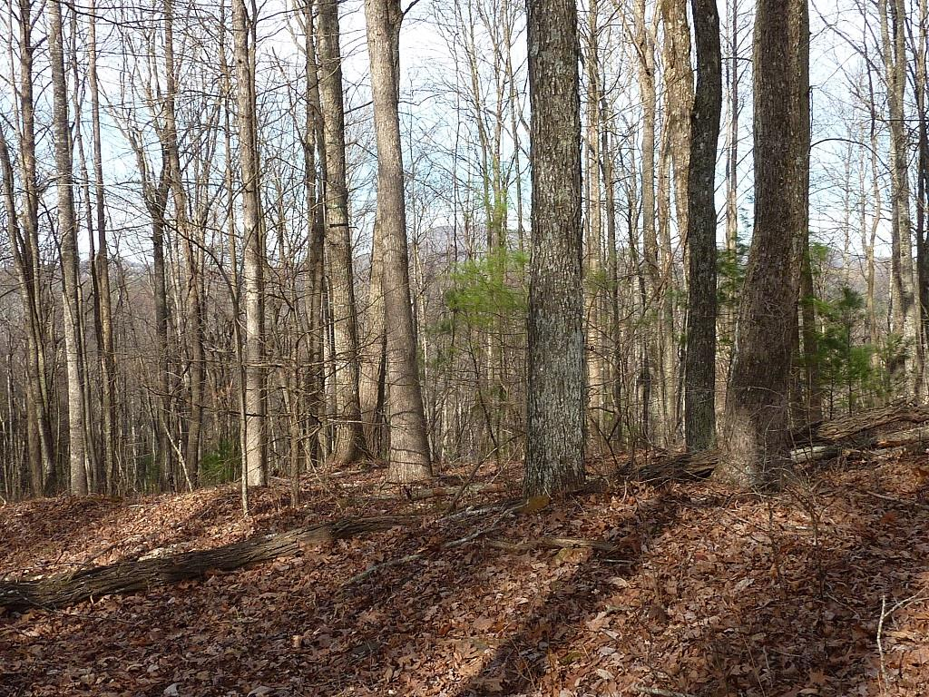 This is a great recreational property that is ideal for hunting, camping or hiding from the world. There is an old home on the property that is very overgrown with it's condition unknown. Close to the Blue Ridge Parkway and Olde Mill Golf Club.