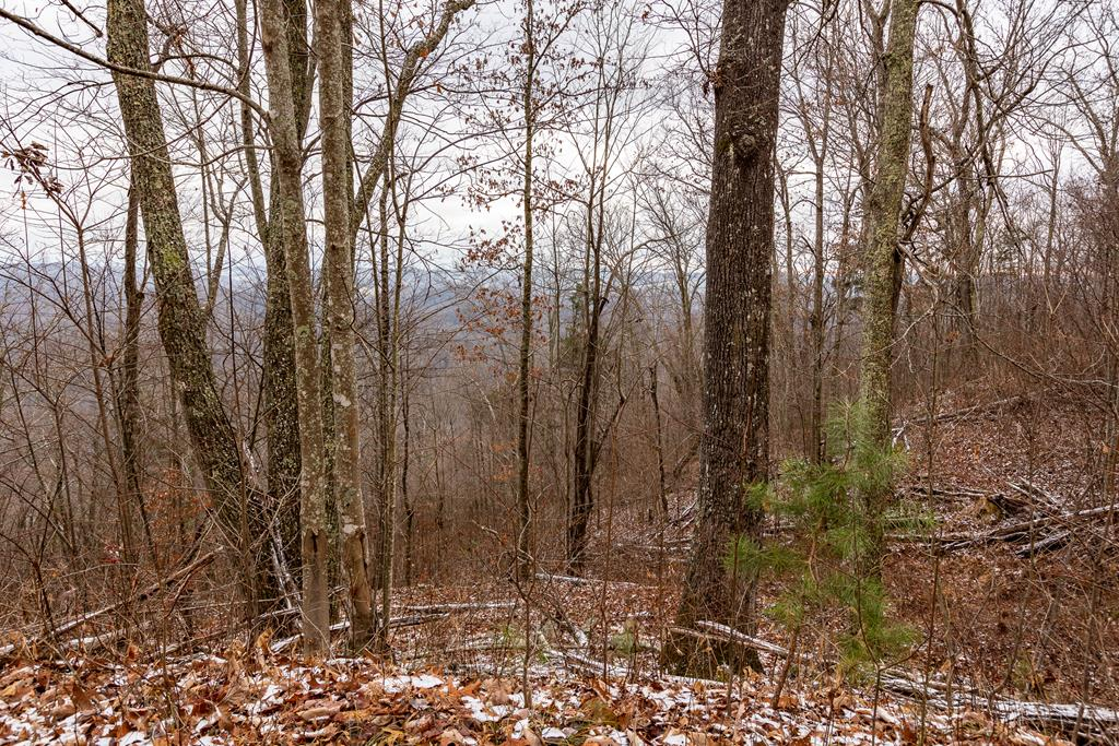 Private, secluded mountain land with a view and river access!  This property offers the perfect spot for your new home or cabin in perfect seclusion and privacy on pristine wooded mountain land, while still minutes from Abingdon.  This listing is 2 lots (27A, 30), totaling 23.53 acres +/- and includes road frontage.  Property is located on the north side of North Fork River Road.  Property owners within this subdivision will have access to the 1.6 acre community lot located near the entrance to the subdivision across the road, which has river frontage suitable for light boat, kayak, canoe launching.  Additional acreage may be purchased.