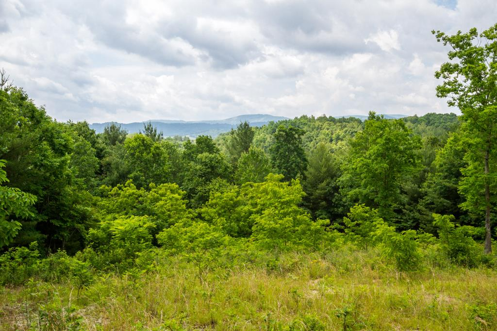 Beautiful mountain views of Elk Creek Valley located in Grayson County. This is one of two adjoining tracts. This lot has its own entrance and road leading up to a buildable home site with an outstanding view. This property offers plenty of seclusion and acreage, and is very close to Jefferson National Forest. Very close to hiking trails and horse camps. Lot 5 has been perked for a 3 bedroom septic system. Lot 4 & 5 can be sold individually or together. Call for an appointment today!