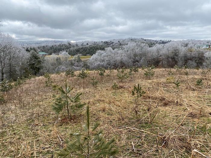 Nice 22 +/- acres in Carroll County. Mixture of open pasture and woods. Property has paved road frontage on Little Vine and Whitetown Road. Nice building lot with mountain views. Spring box for watering livestock, partially fenced with abundant wildlife. Would make a nice hunting tract or mini farm. Approximately 12 acres has been planted in white pines and has a current lease to tip the pines. Lease is in effect until April 2028. Lease pays owner $100 per acre/per year.