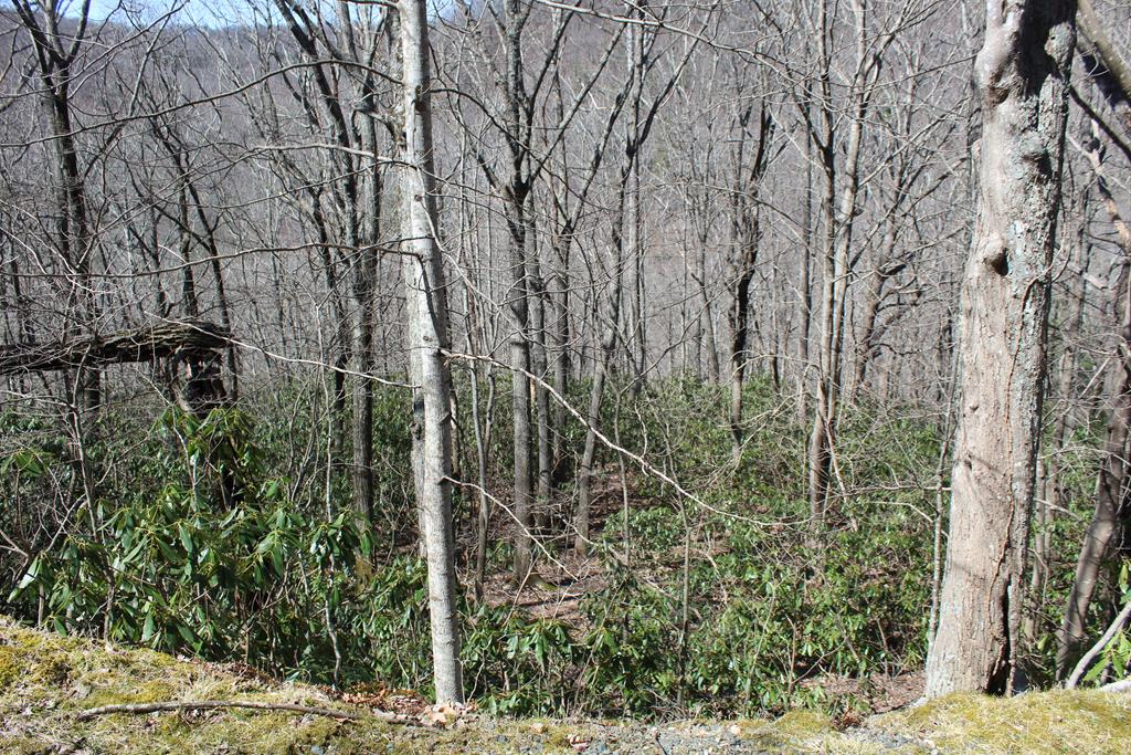 Deep in the Beautiful Cascade Mountain Resort. All wooded lot. Amenities include swimming pool, pond, clubhouse, playground, tennis &basketball courts. Gated community.