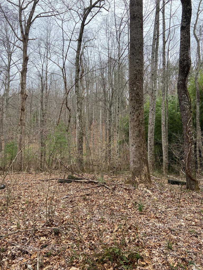 9 +/- wooded acres with some marketable timber. Would make a great hunting tract or perfect for cabin or house. Has creek running through and lots of wildlife!