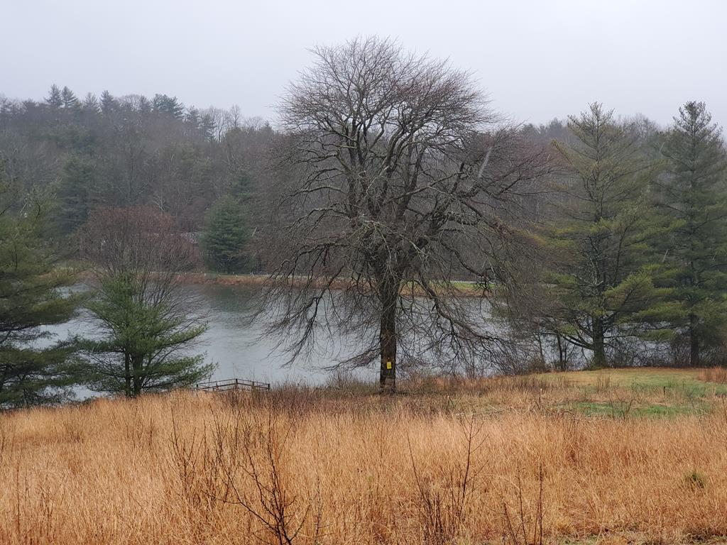 A very rare opportunity to own an acre at Skyland Lakes Golf Course with frontage on the large pond of the 18th Fairway.  This property has exceptional views and has been perked and ready for your custom home.  There is also power/electric on the property.  All paperwork available upon request.