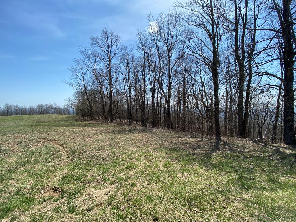 Here you have a lot that, if cleared, would have great Pidemont Views, Located in Elk Horn Acres, a quite development right off the Blue Ridge Parkway. At this price this lot will not last long, so jump on it today. Priced well below tax value. $75 annual fee includes Road Maintenance and an on site dumpster.