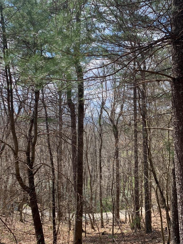 Unrestricted 6.03 acre tract in the mountains of Grayson County. This property features potential short and medium range mountain views as well as a small spring-fed branch. This would make an excellent place to bring your camper to or build a cabin to enjoy the peace and quiet. This tract is secluded and has frontage on a county gravel road. There is some mature hardwoods on this primarily wooded property as well. This property is located in close proximity to the Jefferson National Forest, stocked trout streams, the New River, and all of the recreational opportunities that Grayson County has to provide.