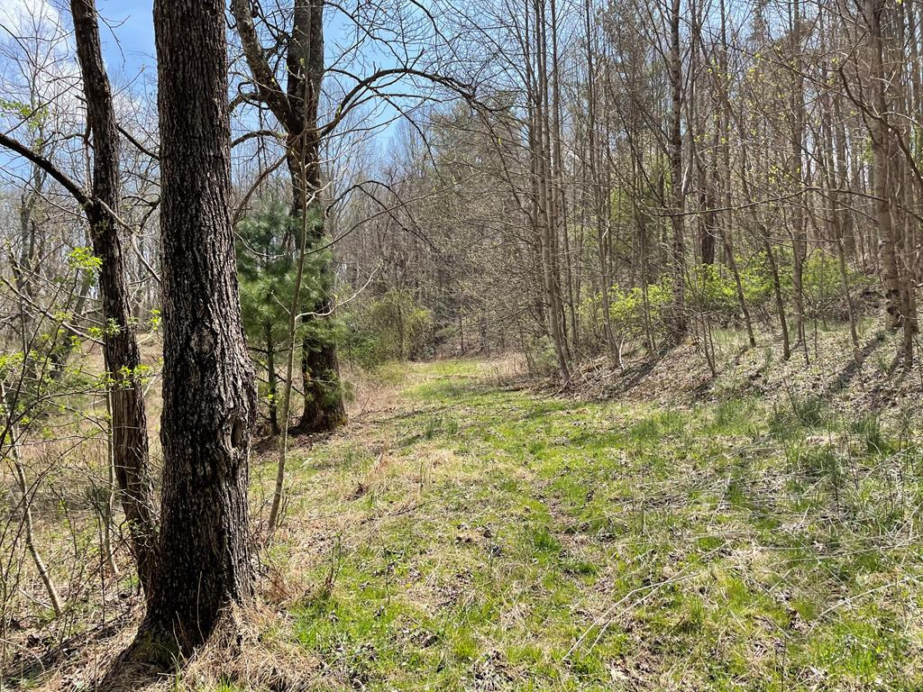 Check this one out! Nice 3.5 +/- acre lot perfect to build a log home on in close proximity to the Blue Ridge Parkway! This lot already has a well, septic, and power available!