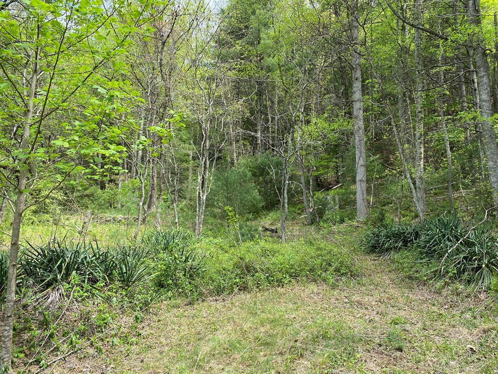 12.26 acres bordering the Jefferson National Forest conveniently located to the Virginia Creeper Trail and the Appalachian Trail.