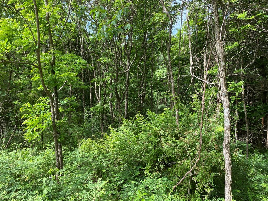 This is a desirable building lot in the Cascade Mountain Resort.  The lot was cleared of large trees several years ago and now has small trees on it.  Septic tank has been installed and community water is ready to be installed.   The lot slopes away from the street.  Cascade Mountain Resort is located just off the Blue Ridge Parkway in Fancy Gap.  It is conveniently located near Interstate 77 and US 52 giving easy access within approximately 6 hours of many areas on the East Coast.  The resort is approximately 20 minutes from Olde Mill Golf Resort and Maples Restaurant and only 30 minutes from Galax, Mt. Airy and Meadows of Dan with Mabry Mill.  There are many wineries in the  surrounding area, too.  This part of Virginia offers a plethora of outdoor activities including hiking, biking, kayaking, horseback riding, and visiting state parks  including seeing the wild horses at Grayson Highlands. State Park  This area is the heart of the Crooked Road bluegrass trail, too.