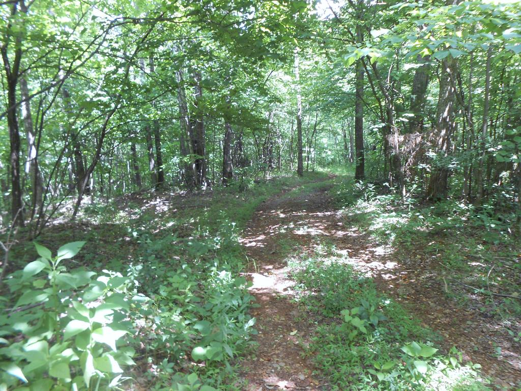 All wooded parcel, driveway and cleared opening to build you dream cabin on or just bring your camper. Good hunting,peaceful and private. Great views from the top!