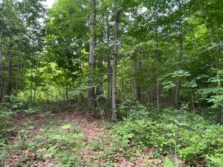 Very peaceful lot but still very close to Blue Ridge Parkway! Secluded lot with hardwoods, driveway in place !  Mostly wooded with opening at the top that is already cleared for a cabin along with foundation footings .  Septic in place !
