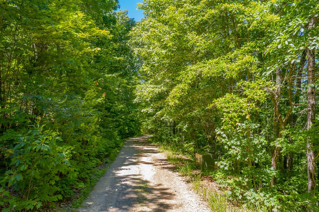 Looking for a beautiful, buildable, and recreational acreage in the Pulaski area? This land easily accessible from the town of Pulaski and I-81. Enjoy a mountaintop to call your own with this 43 acres including your own ridge which has potential for 360 degree views of the Blue Ridge Mountains. Take a look at all the pictures provided and see how this may be the perfect piece of mountain acreage for you! Road Maintenance Agreement in place, but no specific $ has been set. There is a gate on the road so please contact an agent to view the property.