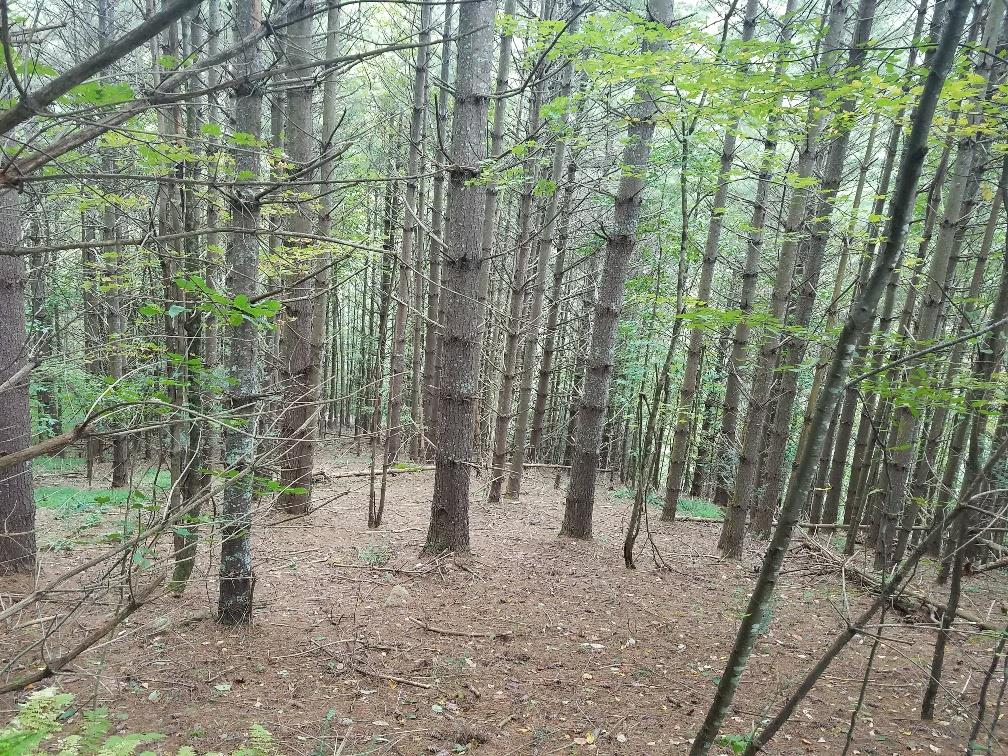 PRICED TO SELL!  35.33+/- WOODED ACRES WITH A LOT OF TIMBER! SMALL CREEK THROUGH PROPERTY AND LOCATED WITHIN A SHORT DISTANCE OF THE NEW RIVER! GREAT PLACE TO BUILD YOUR PRIMARY OR WEEKEND -GET-AWAY HOME!