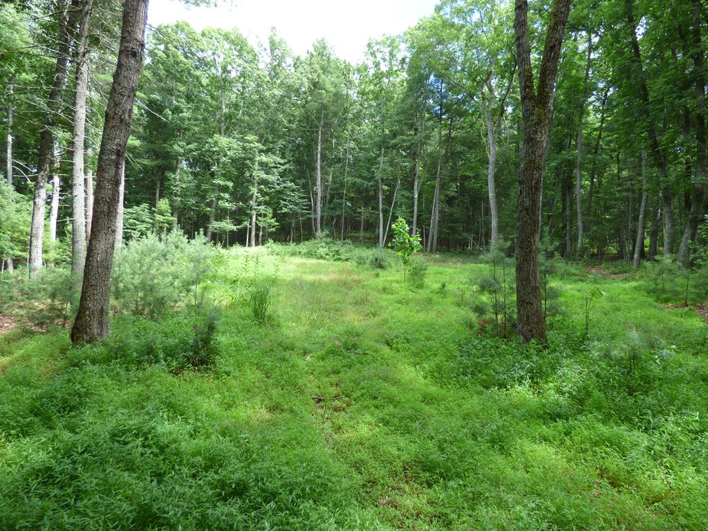 A beautiful lot with 5.91 acres in the heart of Wythe County with privacy and seclusion. This lot sits on the end of a cup-de-sac and is ready for your dream home. This lot has been perked for a 3 bedroom home and has already had a home site cleared, and driveway put in for you! Schedule your showing today!