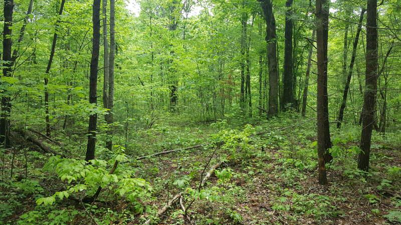Four wooded acres on Old Orchard Loop.  Rolling, sloping land.  Lots of paved road frontage with a drive already in place to the property.  Conveniently located between Stuart, VA and Mt. Airy, NC.  This land is restricted which includes no mobile homes or junked cars. 1400 sq. ft. minimum house size. Nice tract for a cabin!