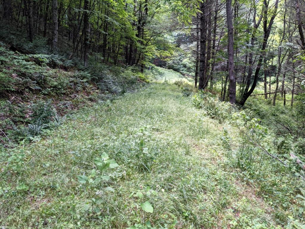 Looking for an escape in the beautiful Elk Creek Valley?  Check out this 18 acre tract with creek frontage on the Elk Creek.  Plenty of wildlife on this property and several great camping or home sites!  Just minutes from Jefferson National Forest that offers Iron Mountain trail and others as well as Hale Lake to enjoy.