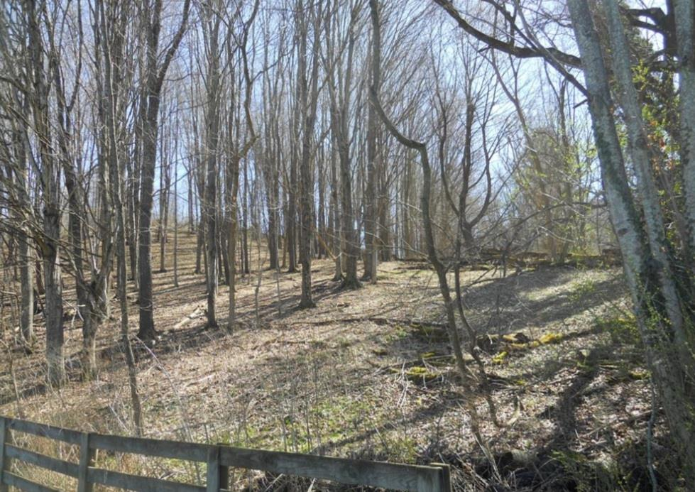 NICE BUILDING SITE IN THE TOWN LIMITS OF TAZEWELL! THIS 3.5 ACRE PROPERTY OFFERS SEVERAL PRIME BUILDING SITES FOR  YOUR DREAM HOME. THERE IS PLENTY OF PRIVACY DEPENDING ON WHERE YOU BUILD. TOWN WATER AND SEWER IS AVAILABLE. IT'S ACCESSED BY A 30 FT RIGHT OF WAY AND WITHIN WALKING DISTANCE OF TAZEWELL'S BEAUTIFUL MAIN STREET.