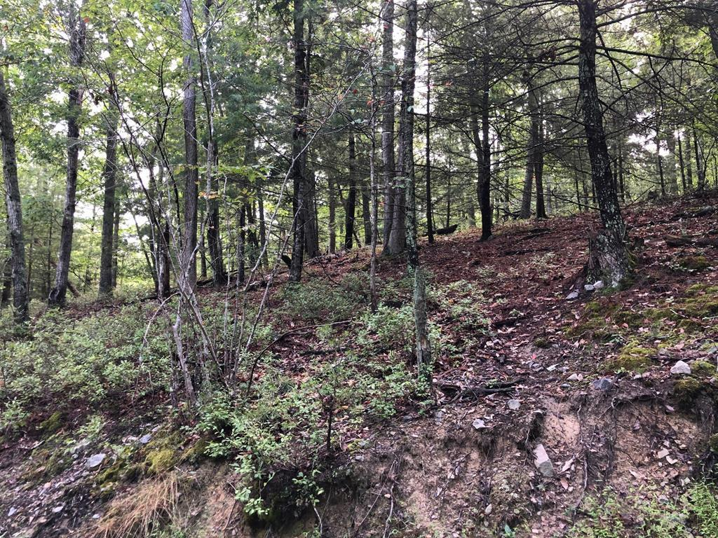 Great 1.577 Acre building lot in Auburn School District.  Priced below current tax assessment.  Convenient location close to Radford University, CNRVMC, I81, Route 11, Route 114, VT and all points in the NRV.  Soil work for Septic, Convenants and Restructions, and Survey in the Documents.