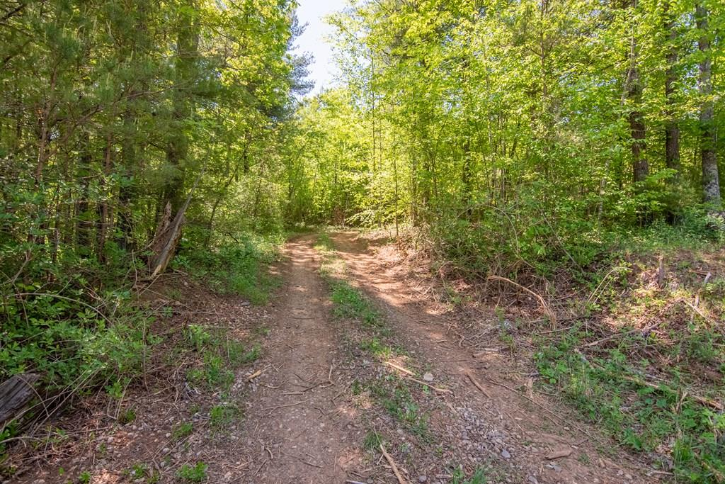 Wooded tract with easy access off Floyd Highway. Close to Town of Floyd. Multiple land tracts for sale, please call listing agents for more details.
