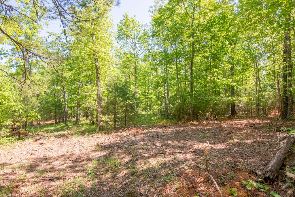 Wooded tract with easy access off Floyd Highway. Close to Town of Floyd. Multiple land tracts for sale, please call listing agents formore details.