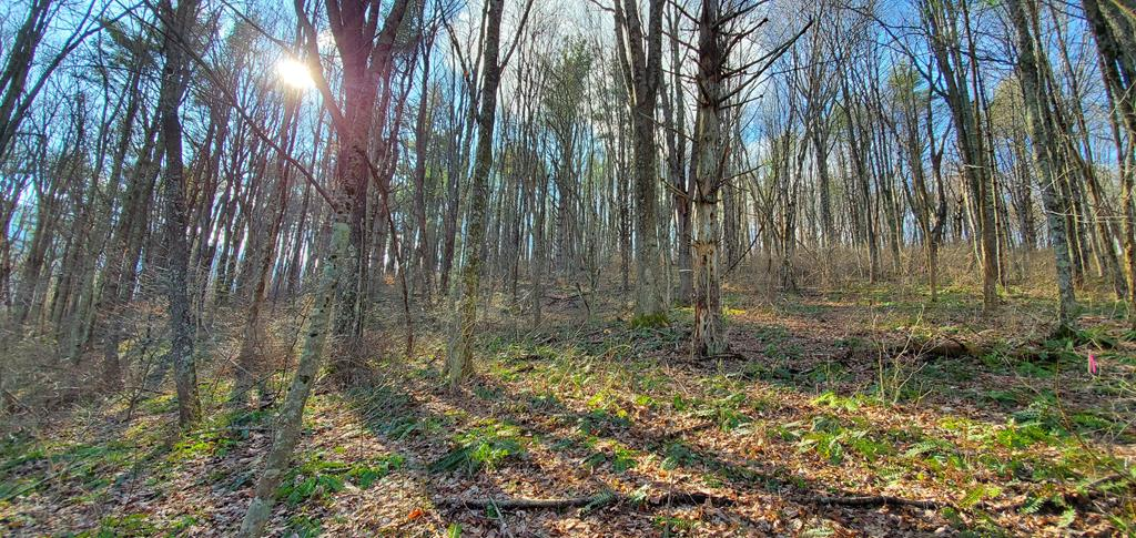 Rare opportunity to purchase a track of this size in beautiful Thompson Valley!  Trail through the property and it is ideal for either a stick built home or a double wide.  Make your dream come true.......both wooded and cleared land.  Property surveyed in 2019