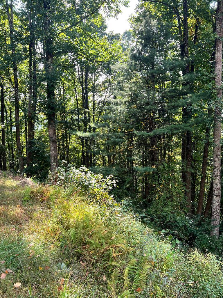 0.4 acre wooded lot in Chalet High.