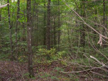 GREAT BUILDING LOT, LAYS MOSTLY LEVEL AND THEN SLOPES IN THE BACK. SMALL STREAM RUNNING ON THE PROPERTY. SINGLE FAMILY LOT ONLYNO SWVAR LOCK BOX